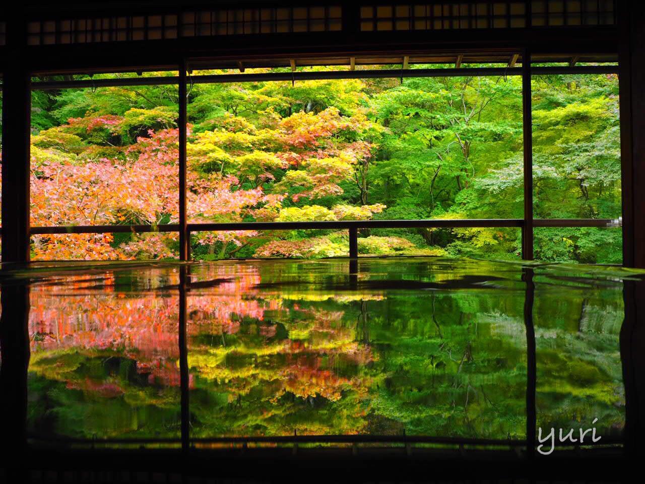 京都 瑠璃光院で撮れる素敵なリフレクション