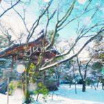 京都旅のおさらい~便利なフリー切符や観光名所のアクセスまとめ~