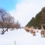 冬の北海道③雪のモエレ沼公園の罠