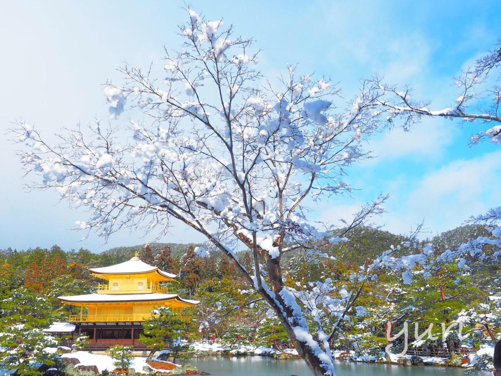 雪の京都に行ってきました②金閣寺