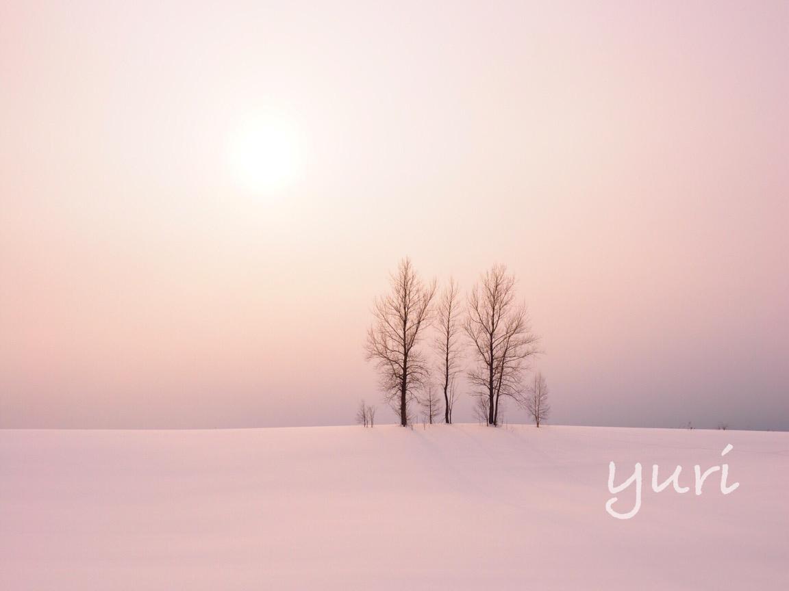 冬の美瑛旅 バスよりもタクシーよりも、絶景巡りに絶対おすすめの1日ツアーをご紹介!