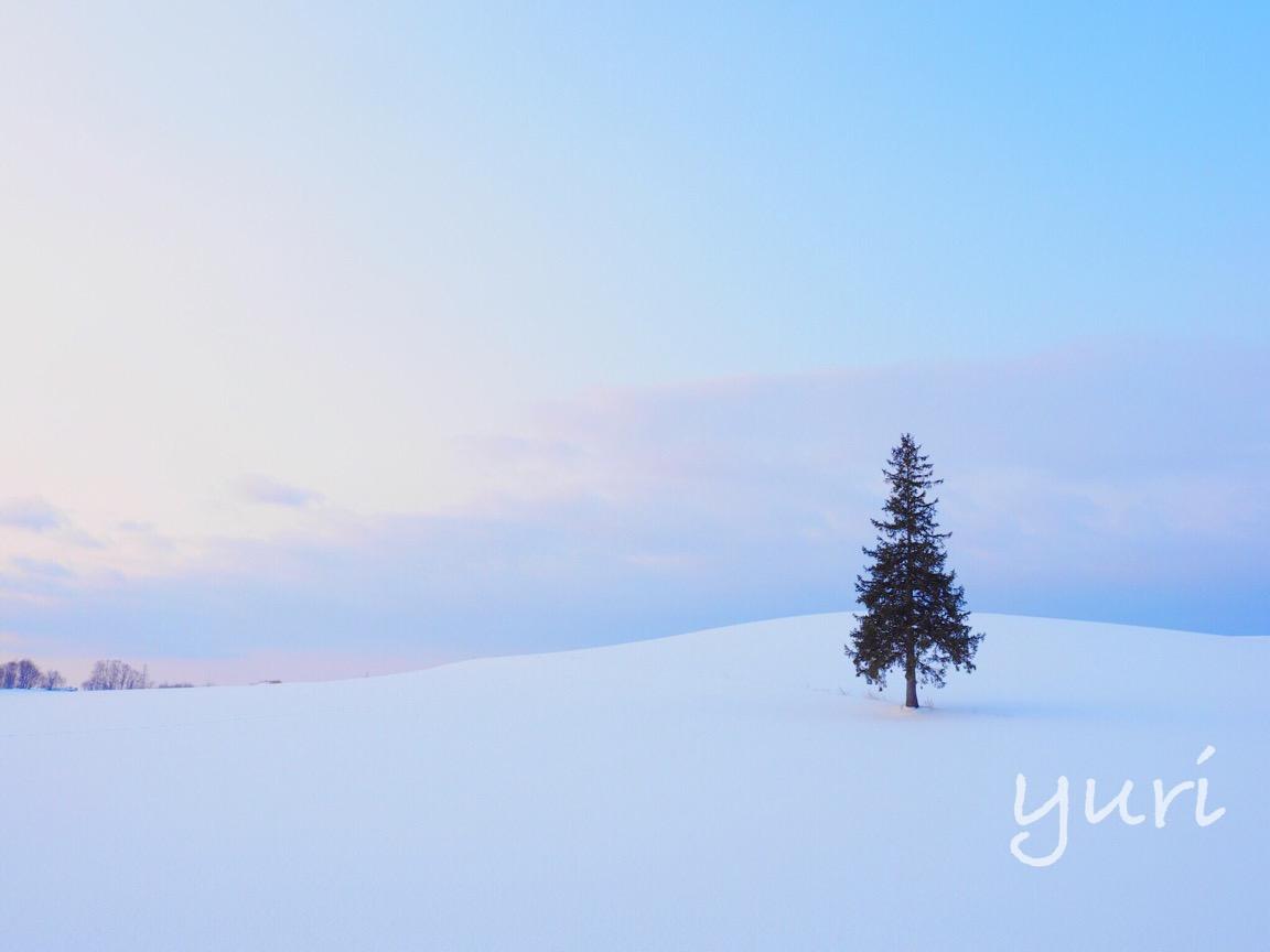 冬の北海道旅⑨写真家「阿部俊一さん」に教わる冬の美瑛プレミアムフォトツアーに参加しました