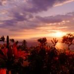 2回目の舞洲ゆり園で絶景の夕日を