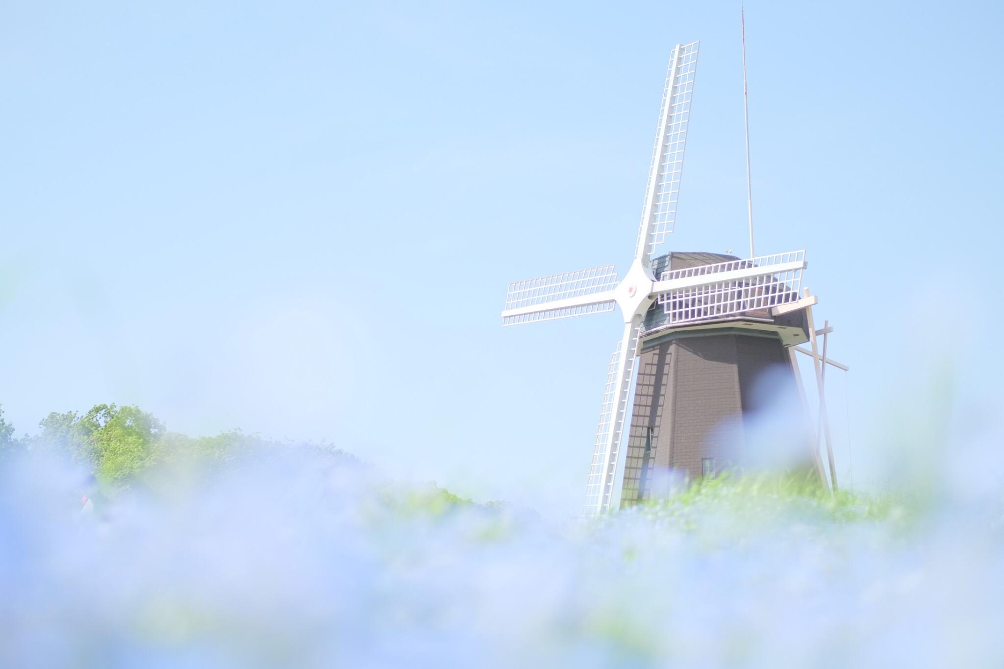 鶴見緑地公園で風車とネモフィラのショットを