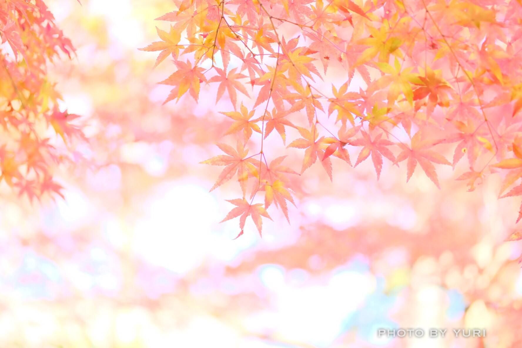 ふんわりかわいい紅葉エアリーフォト撮影のコツ