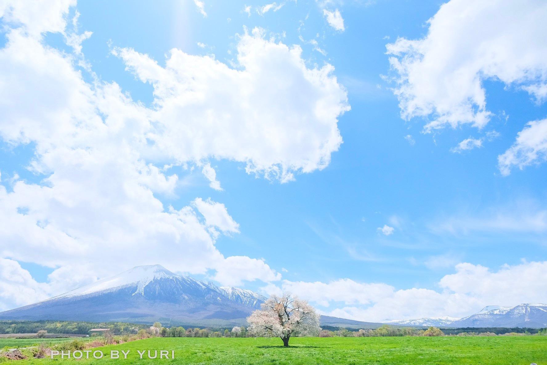 遅咲きの桜も!GW~5月上旬でも楽しめる青森岩手観光スポット5選
