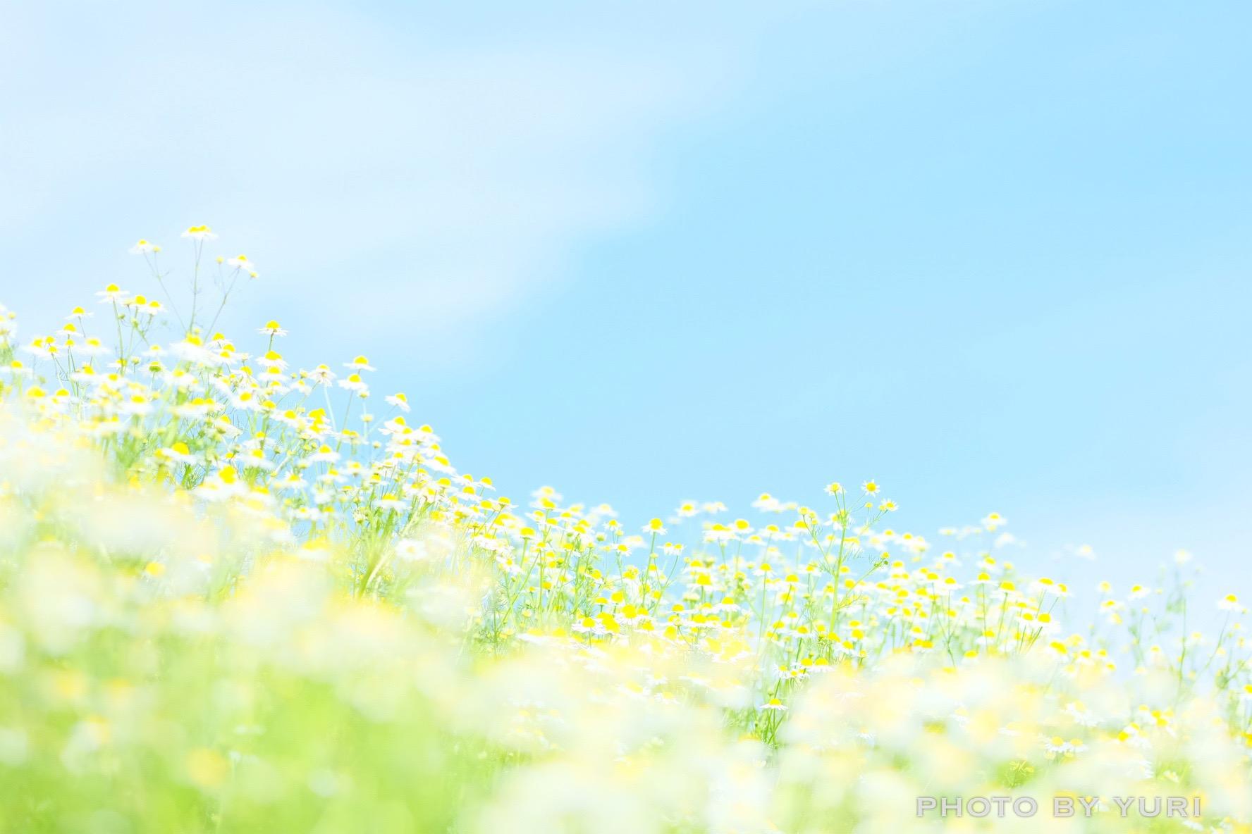 はなまっぷ本2「1年中楽しみたい! 日本の美しい花暦」の表紙写真に選ばれました