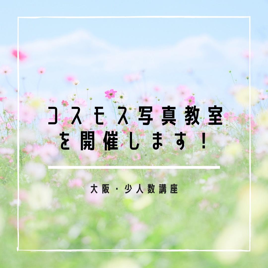 かわいいコスモス写真教室(大阪)を開催します!【追加開催決定!】